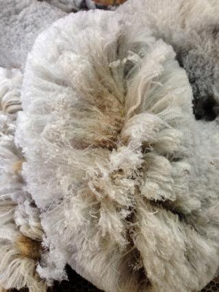 CVM Wool